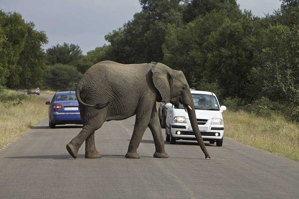 Secret Africa - Elephant Crossing The Road
