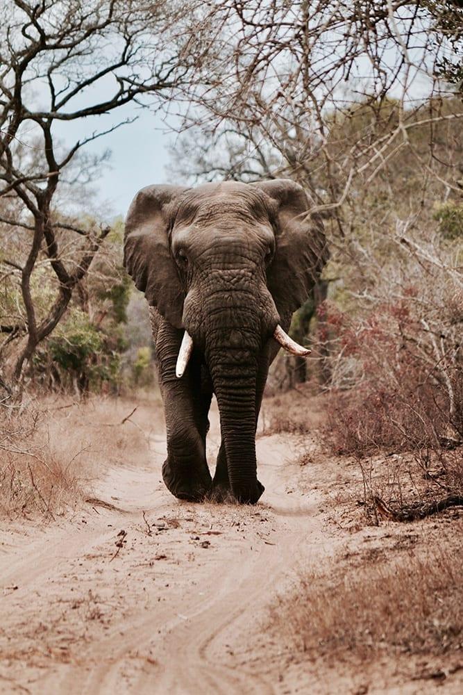 Secret Africa - Lion vs Elephant - jean wimmerlin unsplash
