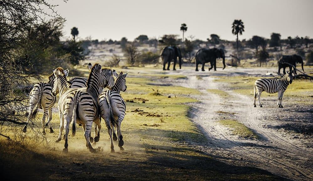 Makgadikgadi Salt Pans Zebra Migration
