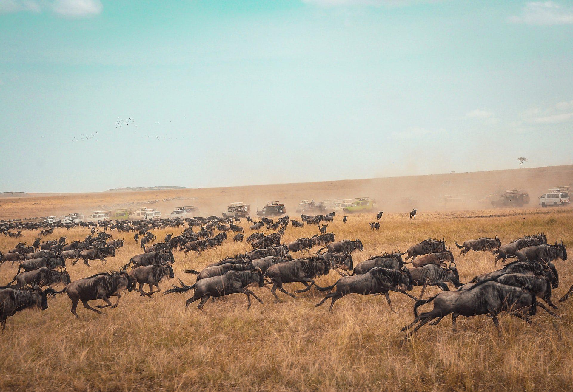 Top 10 sights to see in Kenya - Masai Mara National park
